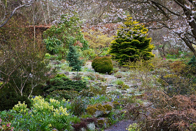Branklyn Garden Spring backdrop of evergreens