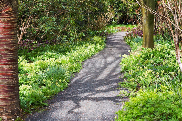 Branklyn Garden Spring pathway lined with oxslips