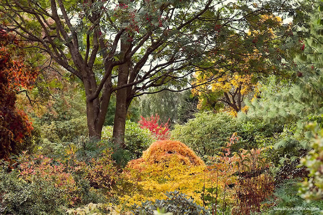 Branklyn Gardens in October