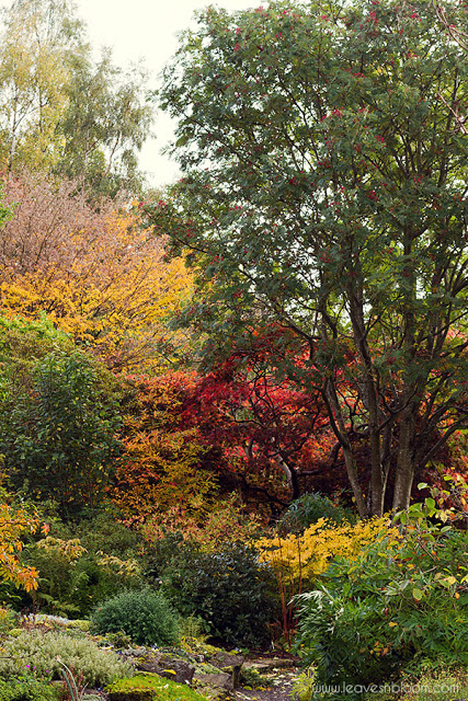 Branklyn garden in Ocotober