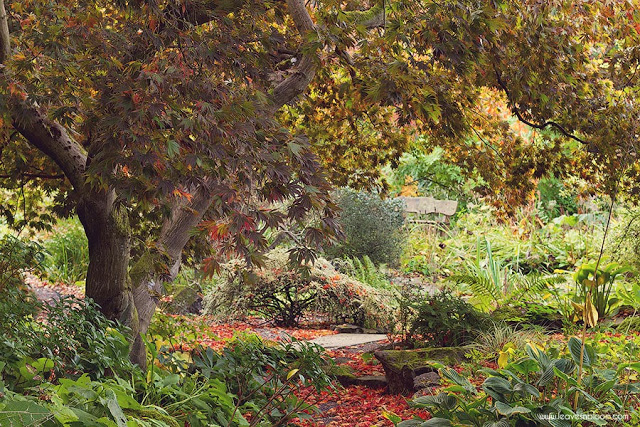 Branklyn Garden in October