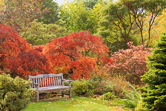 Branklyn Garden autumn foliage