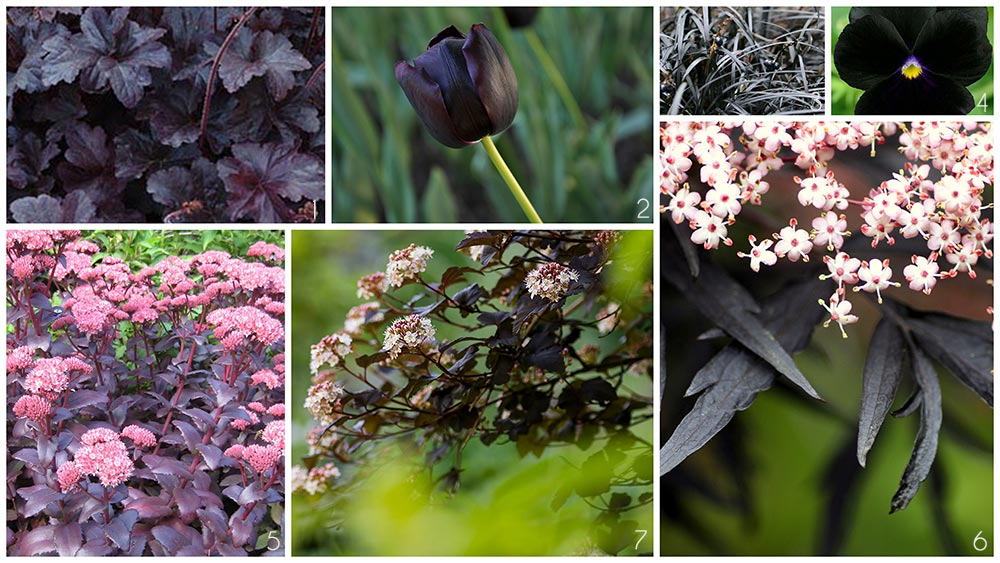 this is a collage of garden plants that have near black petals or leaves